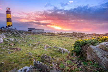 Amazing sunrise at St. Johns Point Lighthouse in County Down, Northern Ireland. Rocks and flowers on coastline.