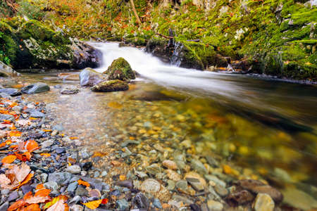 Cascades and waterfalls on mountain stream or creek, between mossy rocks in Tollymore Forest Park in autumn, Newcastle, County Down, Northern Ireland