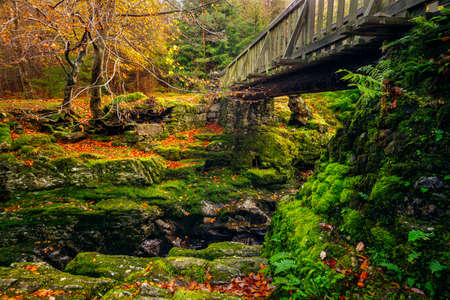Cascades under wooden bridge on mountain stream, with mossy rocks in Tollymore Forest Park in autumn, Newcastle, County Down, Northern Ireland Stock Photo