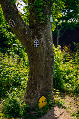 Fairy doors and windows on tree in forest for the little people, Ireland