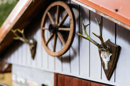 Wooden shed or hut with antlers and cart wheel decoration over doors. Trophy from deer skull with antlers. Country farm