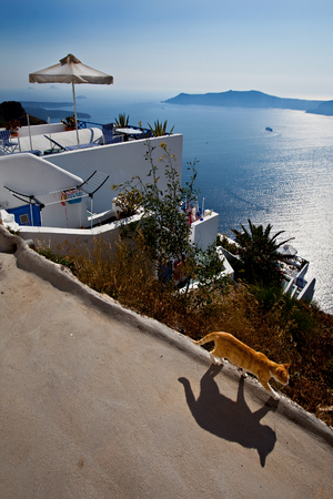 clear path: Ginger red cat casting a shadow walking path on the background of a scenic, Aegean seascape under clear blue sky; He Cyclades islands, Greece. Stock Photo