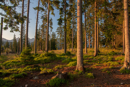 A path in the forest leading to the mountains of the Tatra mountains Stock Photo