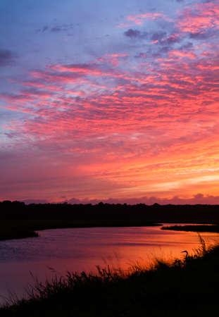 Een grote blauwe reiger kijkt op zonsondergang over een getijde kreek. Stockfoto