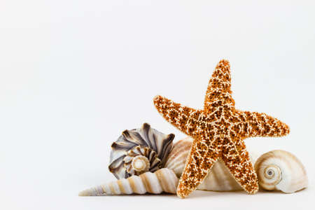 A sugar starfish and various seashells. photo