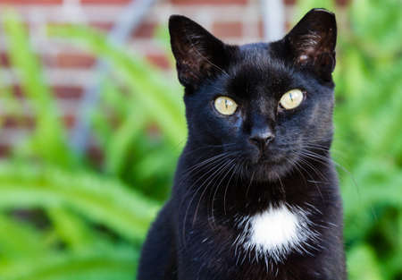 A black cat with a white spot and striking yellow eyes