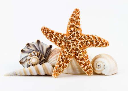 starfish: A sugar starfish and various seashells  Stock Photo