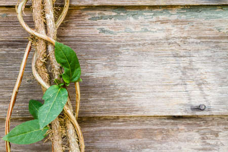 A vine grows along rustic wood boards