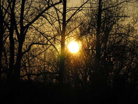 Zon door de bomen Stockfoto