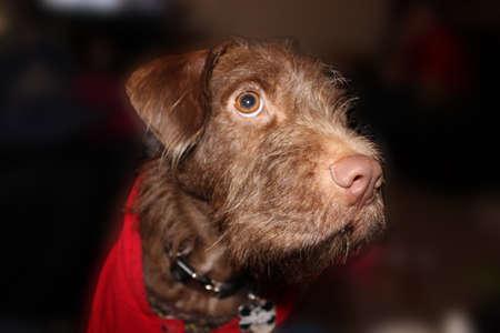 interrogativa: perro interrogativa Foto de archivo