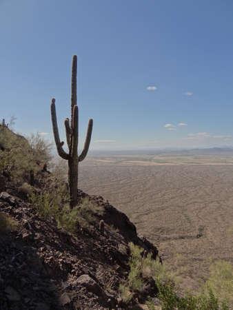 Saguaro on Picacho Peak Stock fotó