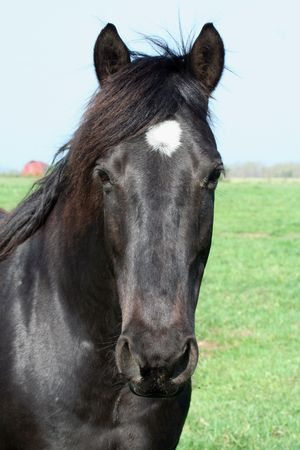 Black Horse Head Shot Banque d'images - 2951086