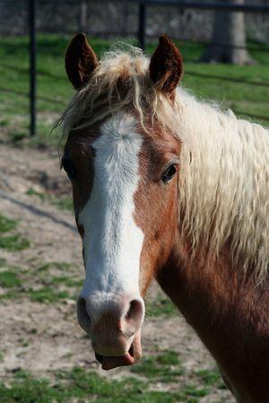 Roan Horse Head Shot