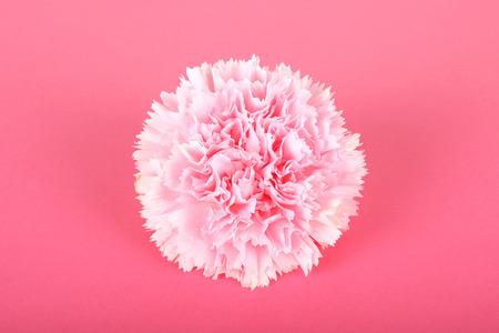 美丽的粉红色康乃馨