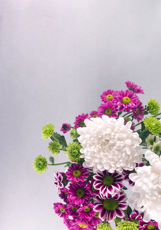 exclusive photo: Chrysanthemum Photo