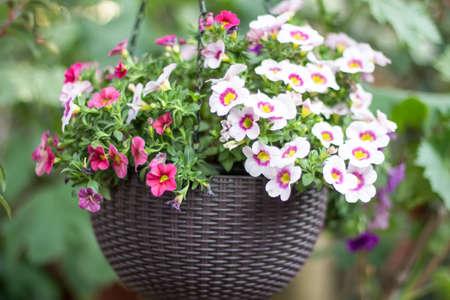 Fleurs suspendues dans un pot de fleurs Banque d'images - 98268336
