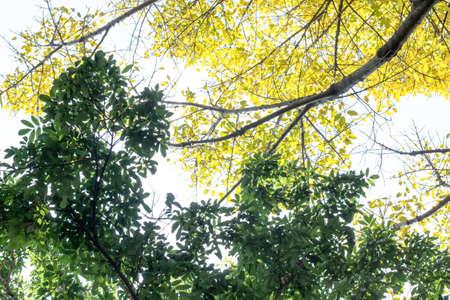 Feuilles jaunes et feuilles vertes Banque d'images - 98262428