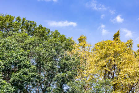 Arbres sous le ciel bleu Banque d'images - 98262450