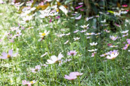 Fleur de galsang dans le parc Banque d'images - 98262467