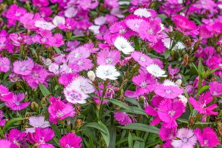 Fleurs roses dans le parc Banque d'images - 98262566
