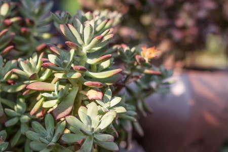 Plantes succulentes Banque d'images - 98275397