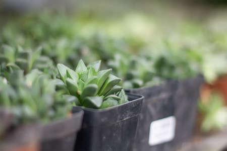Plantes succulentes Banque d'images - 98275403