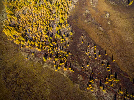 Aerial view of forest in the far East, Russia