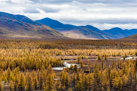 Aerial view of forest in the far East, Russia. Archivio Fotografico