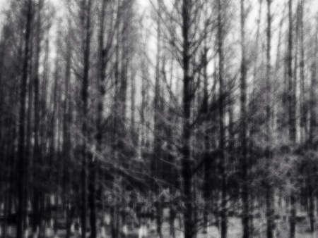 Tree texture background.