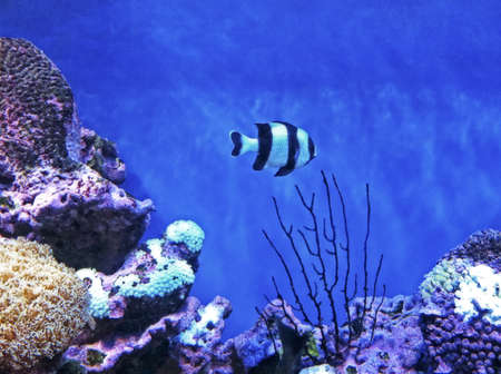 Reef fish on coral.