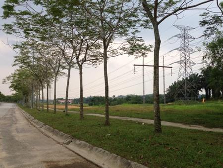 alongside: Trees alongside a road Stock Photo