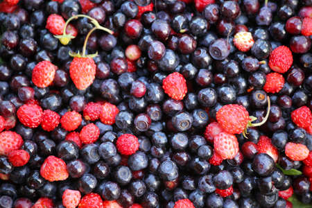 Forest berries, close up. Fresh vegan food.