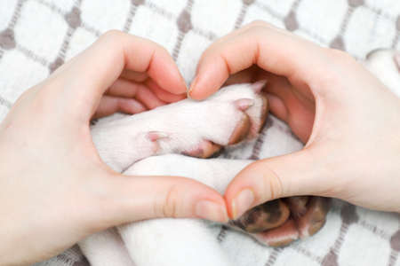 A girl making gesture heart from his hands on the dog paws background.  Banque d'images
