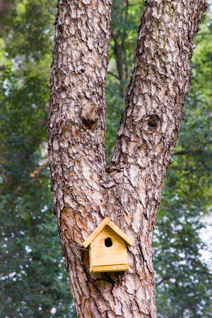 Yellow wooden birdhouse on a tree. Tree with anthropomorphic face. Stock Photo
