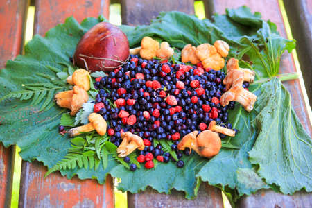 Forest berries and chanterelle mushrooms lying on green leaves. Fresh vegan food. Stock Photo