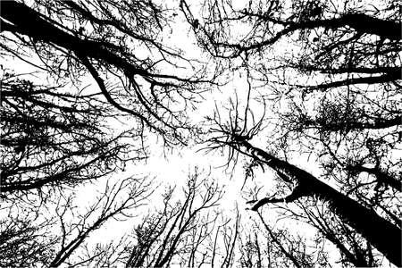 Czarno-biała sylwetka lasu. Widok z dołu. Ilustracja wektorowa w stylu grunge.