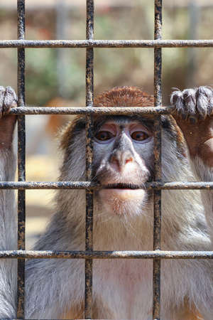 Unhappy sad monkey in a cage at the zoo.