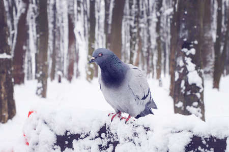 Pigeon sits on a snowy bench in a park.