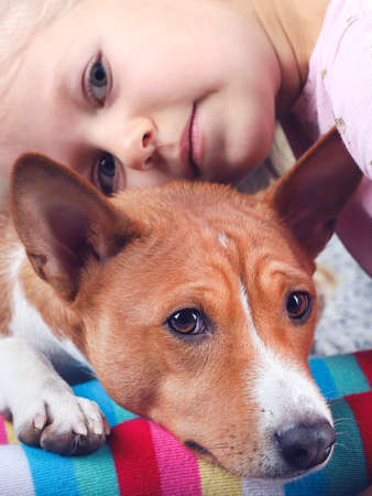 The basenji  dog lies on the girl's legs, the friendship of the child and the animal. 写真素材