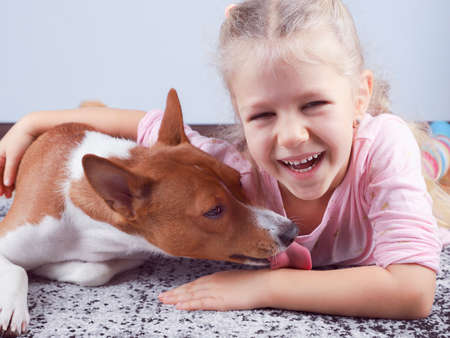 Little blonde curly hair girl smile hugging a red basenji dog. A dog licks a girl's hand.