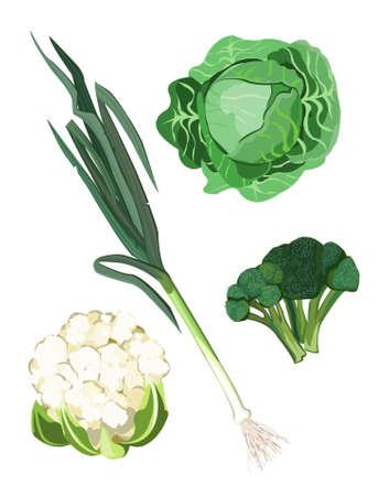 cauliflower: Clip-arts of green vegetables Illustration