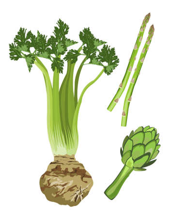 celery: Clip-arts of green vegetables Illustration