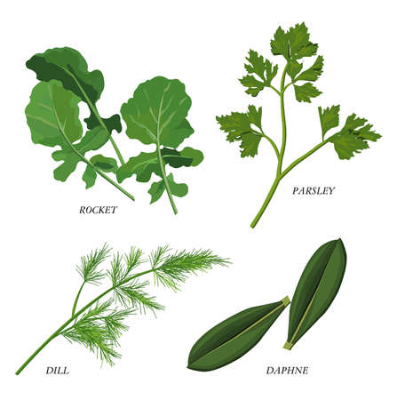 daphne: Clip-arts of various herbs Illustration