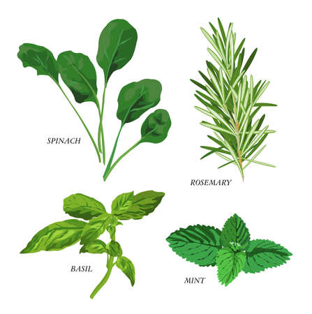 Clip-arts of various herbs Vector