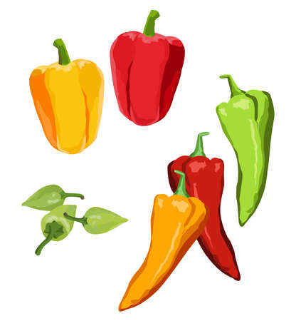 bell pepper: Clip-arts of various peppers Illustration