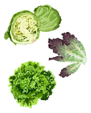Clip-arts of various lettuce types