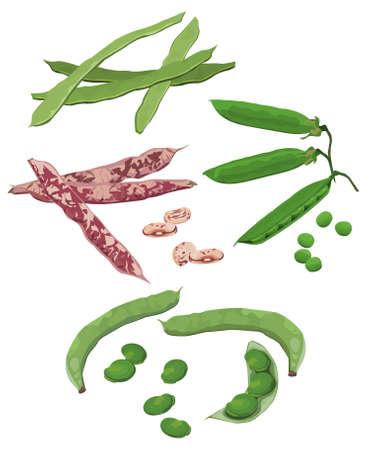 Clip-arts of beans Illustration