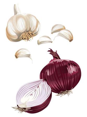 Clip-arts of garlic and onion Illustration