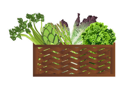 Illustration of Vegetables in the basket on white background