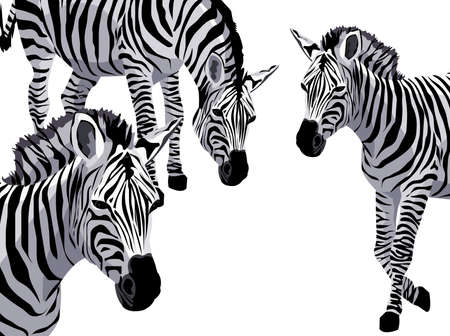 Background illustration with zebras